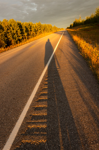 アラスカハイウェイに落ちる長い影の写真素材 [FYI04536102]