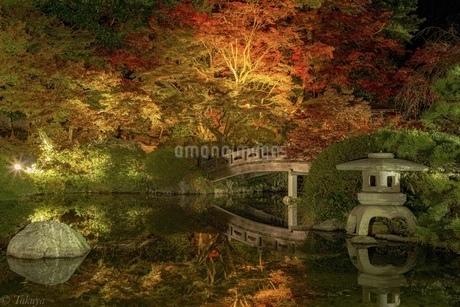 長府庭園の紅葉ライトアップの写真素材 [FYI04536149]