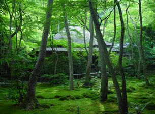 京都 祇王寺 かやぶき屋根と苔の庭の写真素材の写真素材 [FYI04536155]