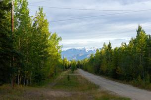 アラスカ、森の砂利道の写真素材 [FYI04536197]