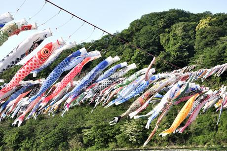 5月のイベント 鯉のぼりの写真素材 [FYI04536213]