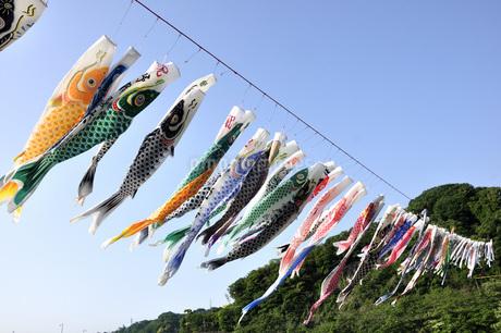 5月のイベント 鯉のぼりの写真素材 [FYI04536238]