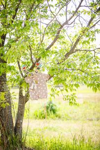 新緑の木にハンガーでかけたベビー服とベビーソックスの写真素材 [FYI04536385]