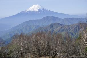 雁ヶ腹摺山の山頂より富士山の写真素材 [FYI04536455]
