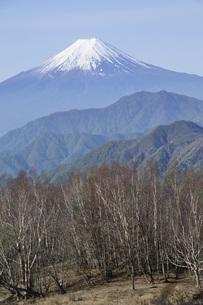 雁ヶ腹摺山の山頂より富士山の写真素材 [FYI04536456]