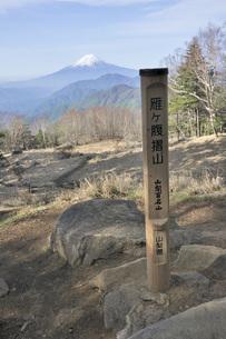 雁ヶ腹摺山の山頂より富士山の写真素材 [FYI04536460]