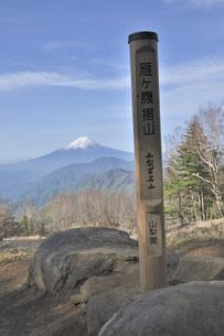 雁ヶ腹摺山の山頂より富士山の写真素材 [FYI04536461]
