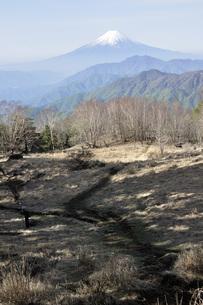 山梨百名山の雁ヶ腹摺山からの富士山の写真素材 [FYI04536463]