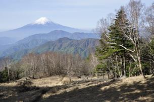 大菩薩連嶺の雁ヶ腹摺山より春の富士山の写真素材 [FYI04536465]