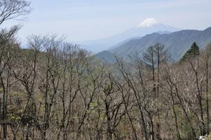 大峠より富士山の写真素材 [FYI04536502]