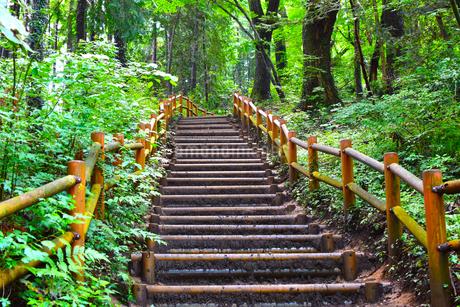 高尾山の登山道の写真素材 [FYI04536768]