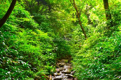 高尾山の登山道の写真素材 [FYI04536775]