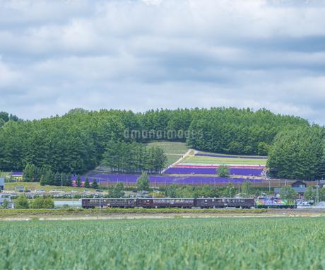 北海道 自然 田園風景 富良野の写真素材 [FYI04536898]