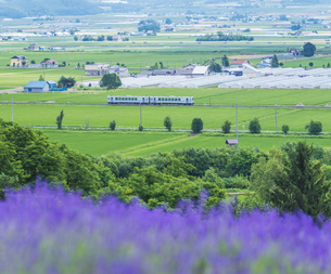 北海道 自然 田園風景 富良野の写真素材 [FYI04536899]