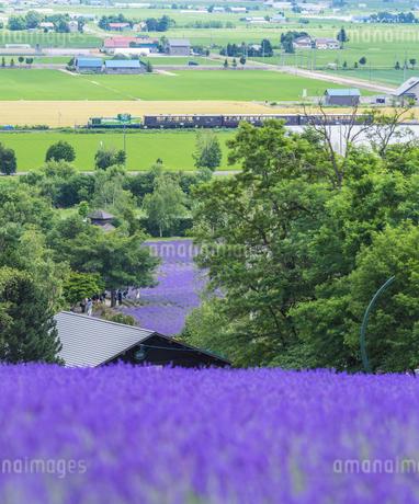 北海道 自然 田園風景 富良野の写真素材 [FYI04536902]
