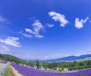 北海道 自然 風景 富良野ラベンダー畑の写真素材 [FYI04536920]