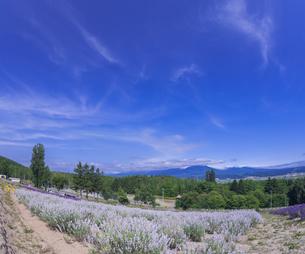 北海道 自然 風景 富良野ラベンダー畑の写真素材 [FYI04536928]