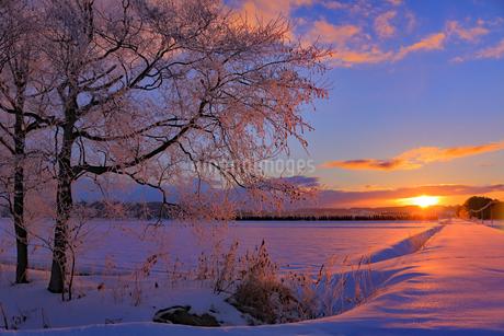 長沼町の厳冬期の朝焼けの写真素材 [FYI04537228]