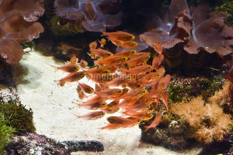 群れをなす魚の写真素材 [FYI04537336]