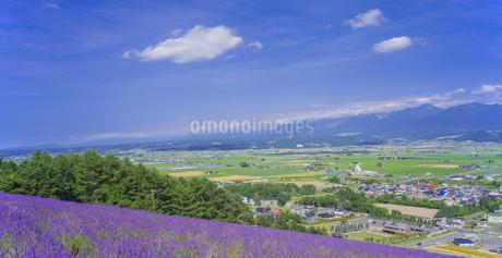北海道 自然 田園風景 富良野の写真素材 [FYI04537405]