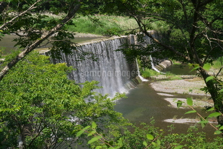 樹木越しに見える古い堰堤の写真素材 [FYI04538147]