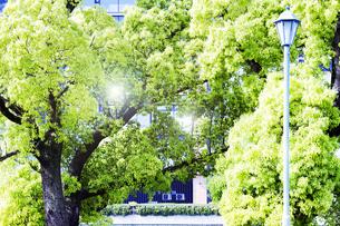 新緑と光の写真素材 [FYI04538190]