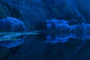 中綱湖の桜の写真素材 [FYI04538668]