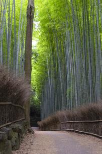 京都 竹林の小径の写真素材 [FYI04538887]