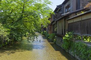 京都白川 夏の写真素材 [FYI04538889]