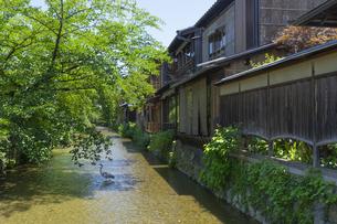 京都白川 夏の写真素材 [FYI04538890]