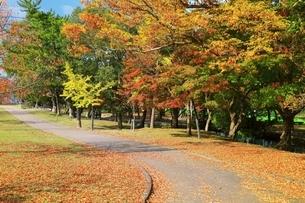 秋の奈良公園の写真素材 [FYI04539025]