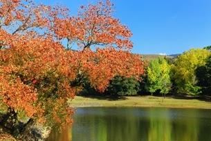 秋の奈良公園の写真素材 [FYI04539042]
