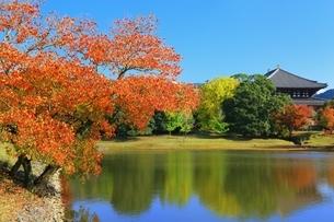 秋の奈良公園の写真素材 [FYI04539044]