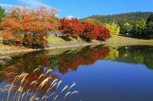 秋の奈良公園の写真素材 [FYI04539047]