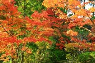 紅葉の円成寺庭園の写真素材 [FYI04539057]