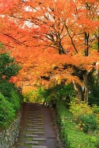 京都・西山 紅葉の善峯寺の写真素材 [FYI04539082]