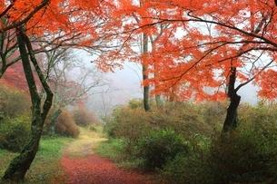 紅葉の鳥見山公園の写真素材 [FYI04539173]