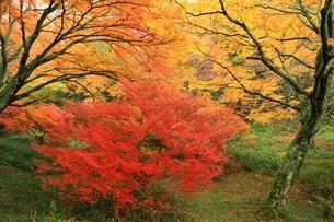 紅葉の鳥見山公園の写真素材 [FYI04539177]