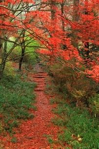 紅葉の鳥見山公園の写真素材 [FYI04539180]