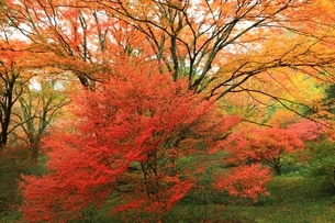 紅葉の鳥見山公園の写真素材 [FYI04539181]