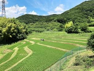 初夏の新緑の風景の写真素材 [FYI04539835]