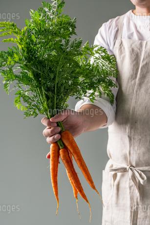 Bunch of fresh carrots in man's hand.の写真素材 [FYI04539872]
