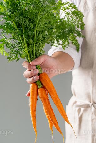 Bunch of fresh carrots in man's hand.の写真素材 [FYI04539874]