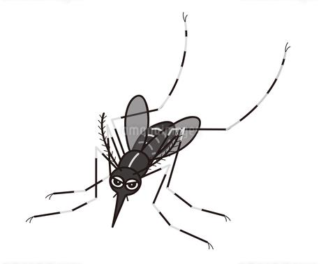 蚊 ヒトスジマジカ イラストのイラスト素材 [FYI04539969]