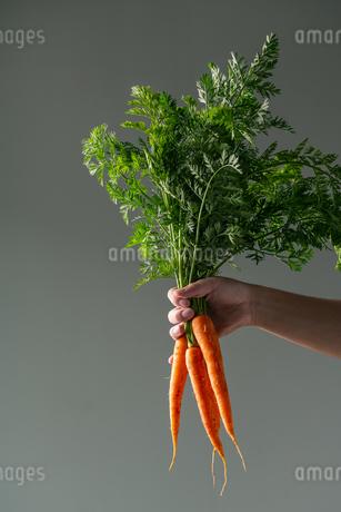 Bunch of fresh carrots in man's hand.の写真素材 [FYI04539987]