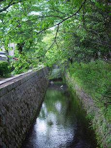 京都 新緑の哲学の道の写真素材の写真素材 [FYI04540546]
