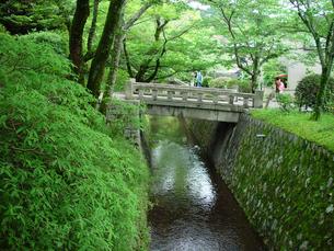 京都 新緑の哲学の道の写真素材の写真素材 [FYI04540551]