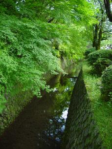 京都 青もみじ 新緑の哲学の道の写真素材の写真素材 [FYI04540559]