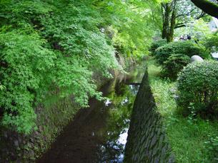 京都 新緑の哲学の道の写真素材の写真素材 [FYI04540564]