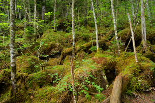 苔のむす森の写真素材 [FYI04540749]